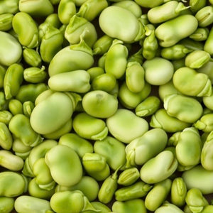 Lima Beans, Fordhook