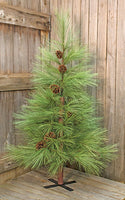 Long Needle Pine Tree 6 ft