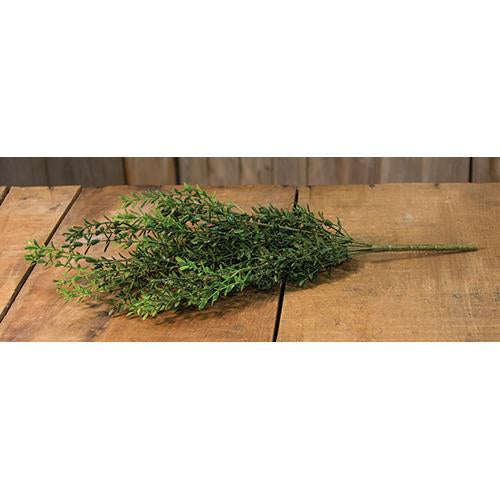 New England Boxwood Bush 19""
