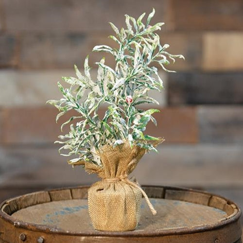 Frosty Herb Tree 10""