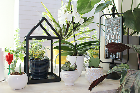 How to Find the Best Plant for Your Home