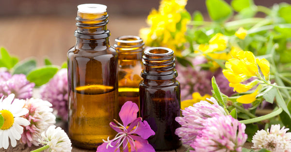 Best Essential Oils to help Support the Respiratory System