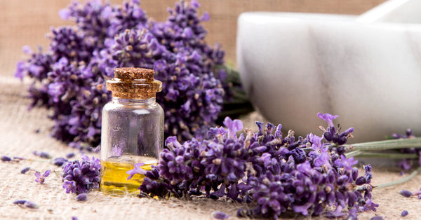 5 Major Benefits Of Lavender Oil That You Should Know