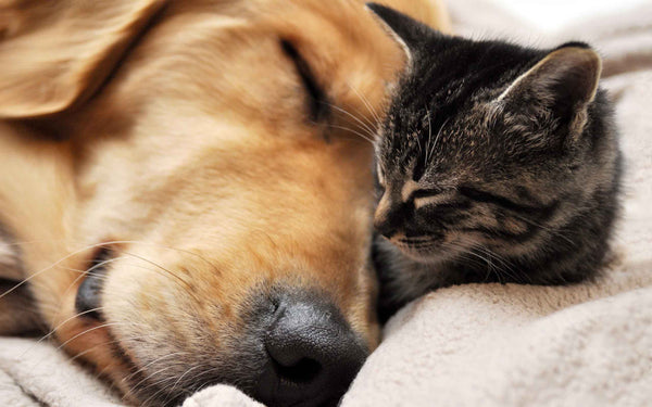 Dog and Cat soundly sleeping together on the bed