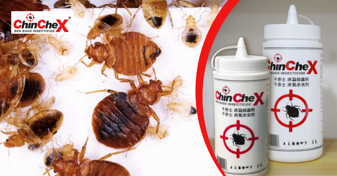 Kill Bed Bugs with the Most Effective Bed Bugs Insecticide