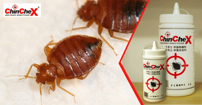 Learn the Most Powerful Techniques for Bed Bugs Control in Singapore