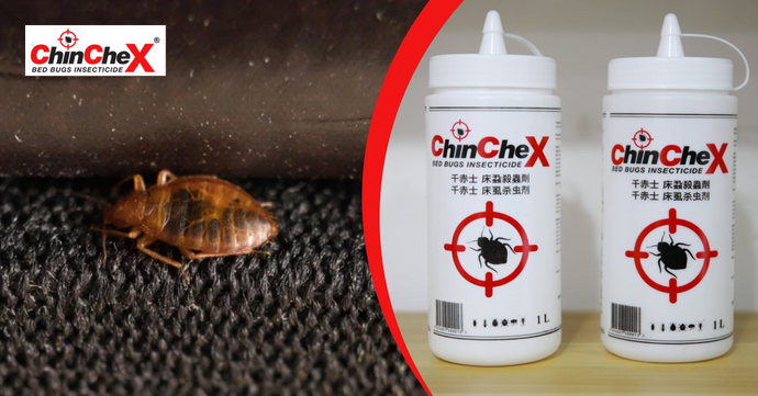Guide On How to Get Rid of Bed Bugs Permanently.