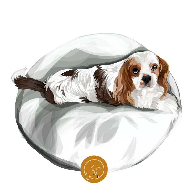Calming Dog Bed UK