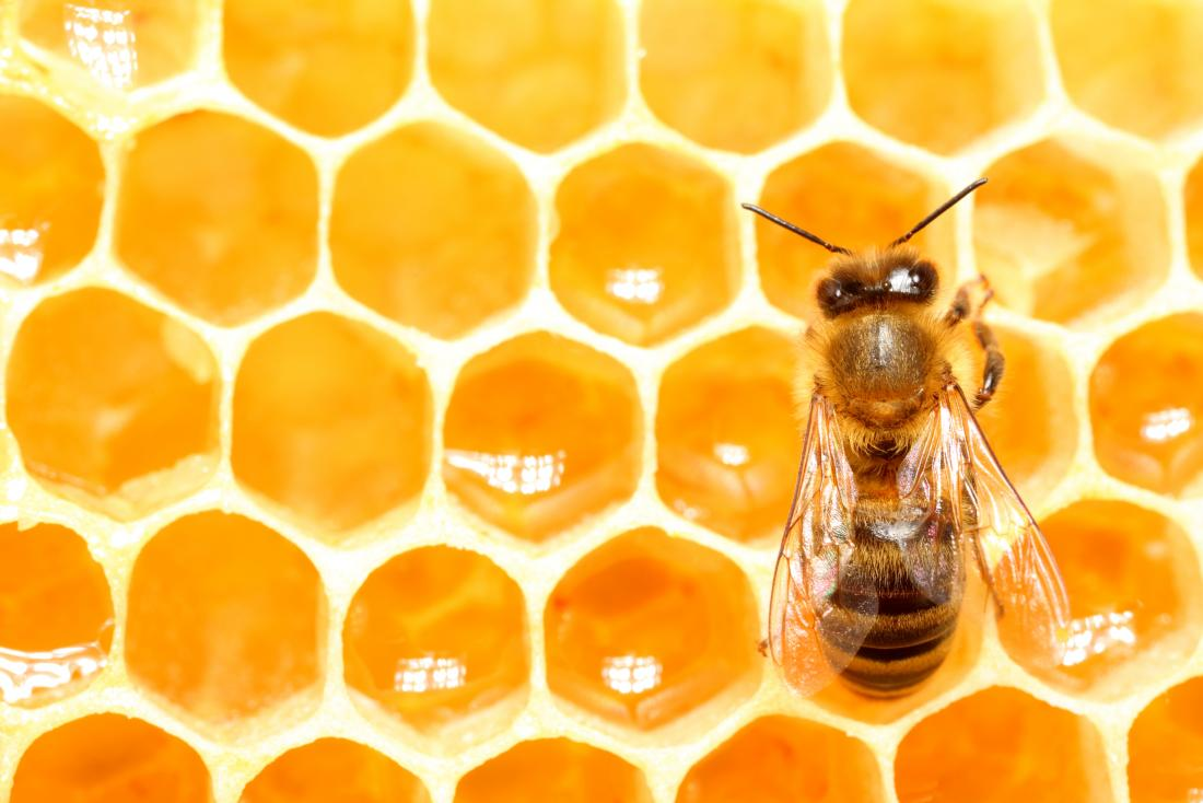 Why Honey Bees are important
