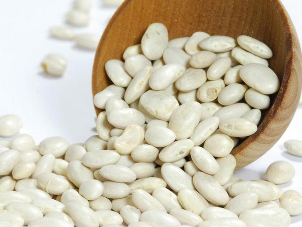 White Great Northern Bean - Dry - America