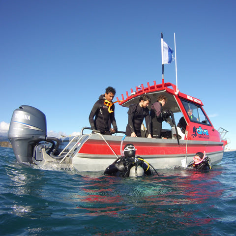 Dive Wellington Boat Trips & Charter