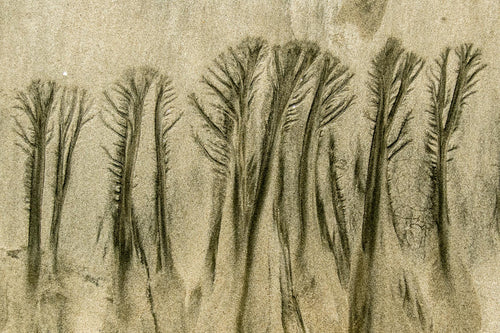 058 Sand Forest 2