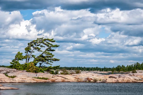 Georgian Bay | Bent Pine | Rocks and Trees