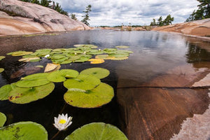 Georgian Bay | Lily Pad | Key river