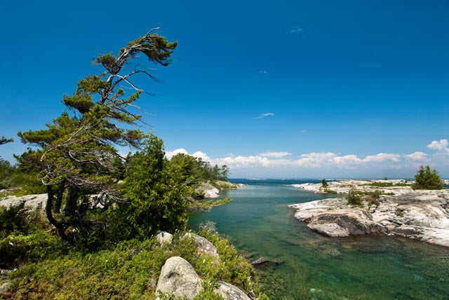 Georgian Bay| Bent Pine| Rocky Shoreline