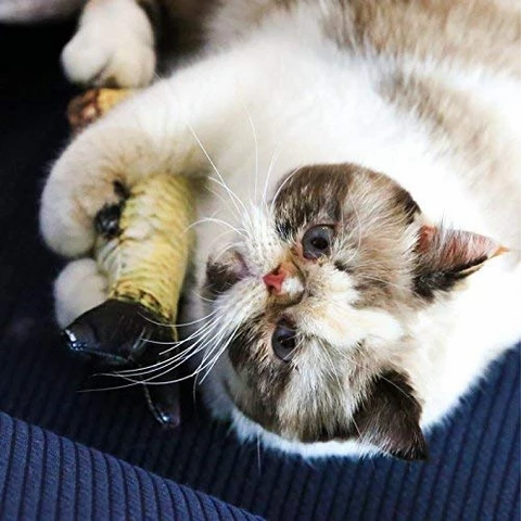 Cat's Favorite: Electric Toy Fish