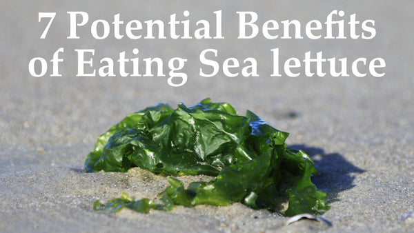7 Potential Benefits of Eating Sea Lettuce Seaweed (Ulva lactuca)