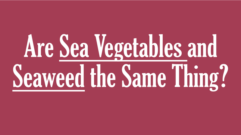 Are Sea Vegetables and Seaweed the Same Thing? | Maine Coast Sea Vegetables