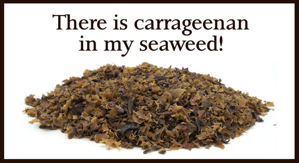 There's carrageenan in my seaweed! Is this a bad thing? | Maine Coast Sea Vegetables