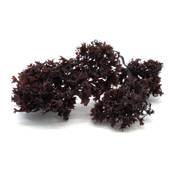Irish Moss Whole Leaf (Chondrus crispus)- Organic SAMPLE - Maine Coast Sea Vegetables