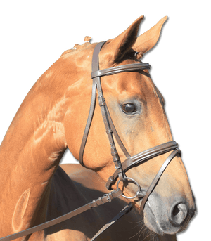 Busse - Star Bridle - Lifestyle