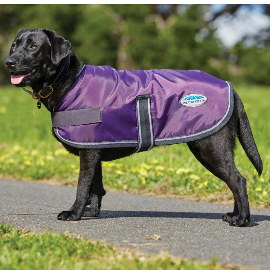 Weatherbeeta - Windbreak Dog Coat - Purple/Black