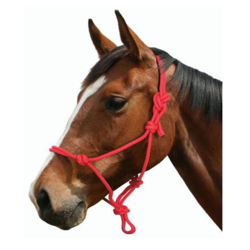 Blue Tag - Rope Halter