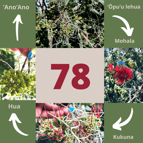 Lehua Blossom Lifecycle
