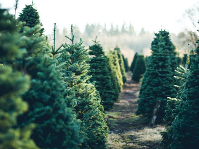 Real vs Artificial – Which Christmas Tree is Best for Me?