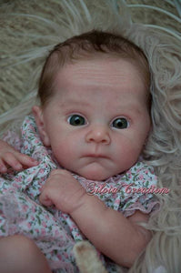 CUSTOM ORDER Reborn Doll Baby Girl or boy Ollie by Adrie Stoete 19 inches  Full Limbs. 4-6 pounds (Reborn Babies)