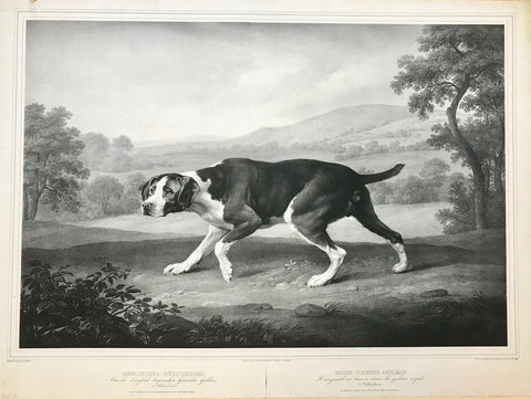 """Englischer Hühnerhund / Chien d'Arret Anglais"" (English Pointer)  Very expressive and fine-grained!!!  Type of print: Lithograph  Lithographen: Johannes Woelffle (1807-1893)  Painter: George Stubbs (1724-1806)  Published in: ""Gemäldegalerien von Menschen und Schleissheim""  Publisher / Date: Piloty & Loehle, Munich, Germany. Ca. 1834-44  The painting belongs to the Art Gallery in Schleissheim, just north of Munich."