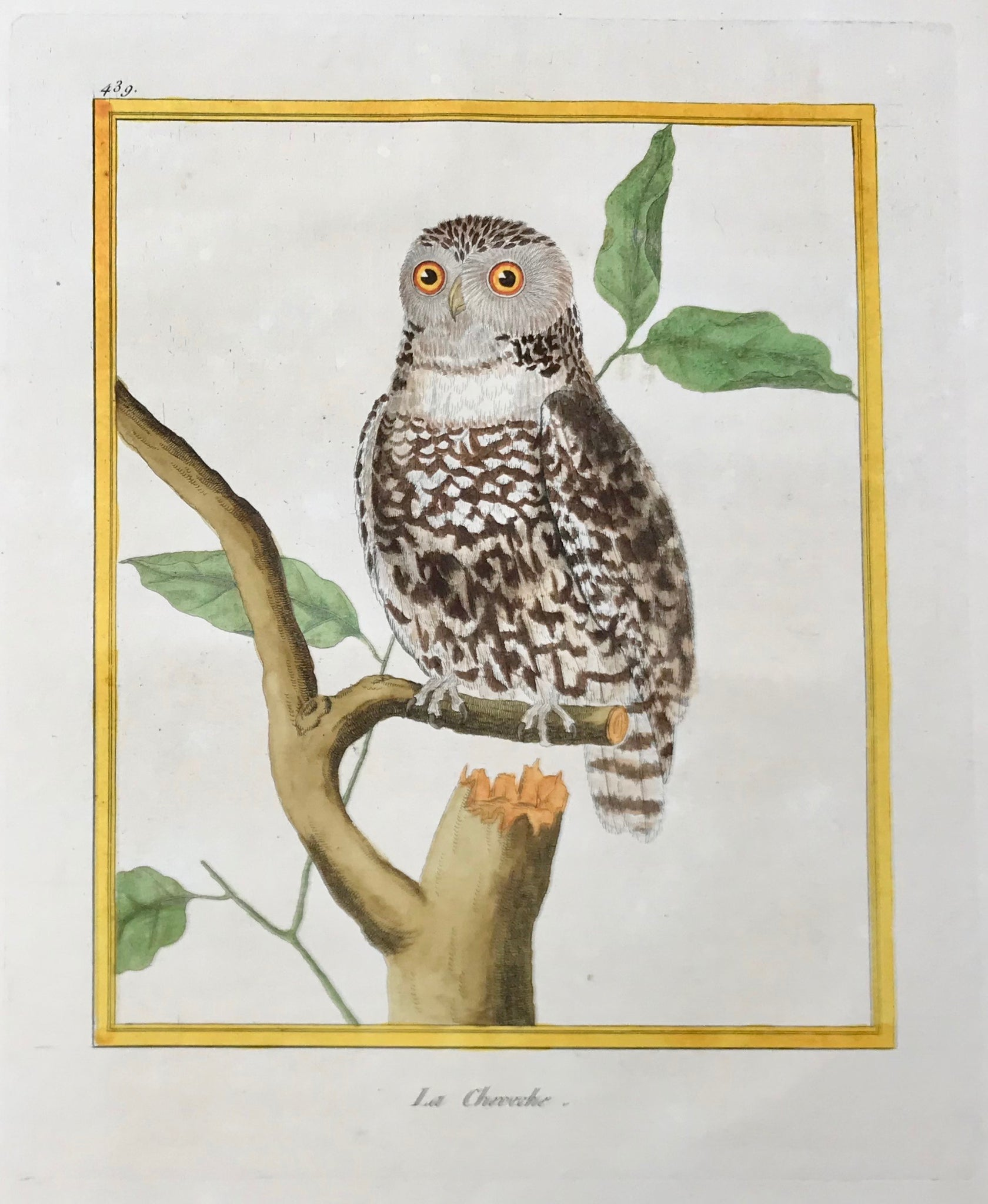 "Owls, Le Cheveche  Antique Owl Prints  by François Nicolas Martinet  Born 1731 in Paris. His death date is unknown (to us). In his monumental ""Histoire de les Oiseaux"", Paris, 1778, Martinet published literally the entire world of birds on 483 most decorative copper plates. Their original authentic hand-coloring is simply superb. And the one hundred and some plates we were able to buy are of the finest condition"