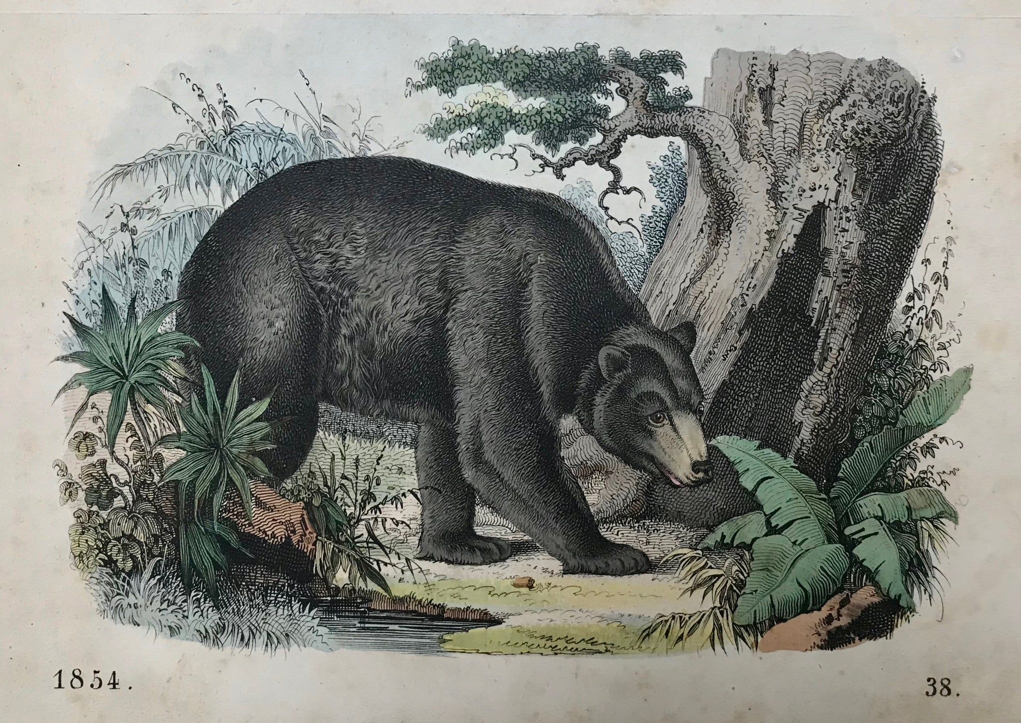 "No title. Brown Bear  Anonymous, originally hand-colored lithograph. Dated 1854  Some minor spotting in margins  11 x 15.5 cm (4.3 x 6.1"")"