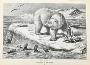 """Eisbaer und Robben"" ( polar bear and seals )  Wood engraving ca Ludwig Beckmann ca 1890. Minor spot in left margin.  23 x 35 cm ( 9 x 13.7 "")"