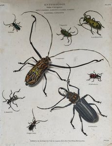 INSECT251865