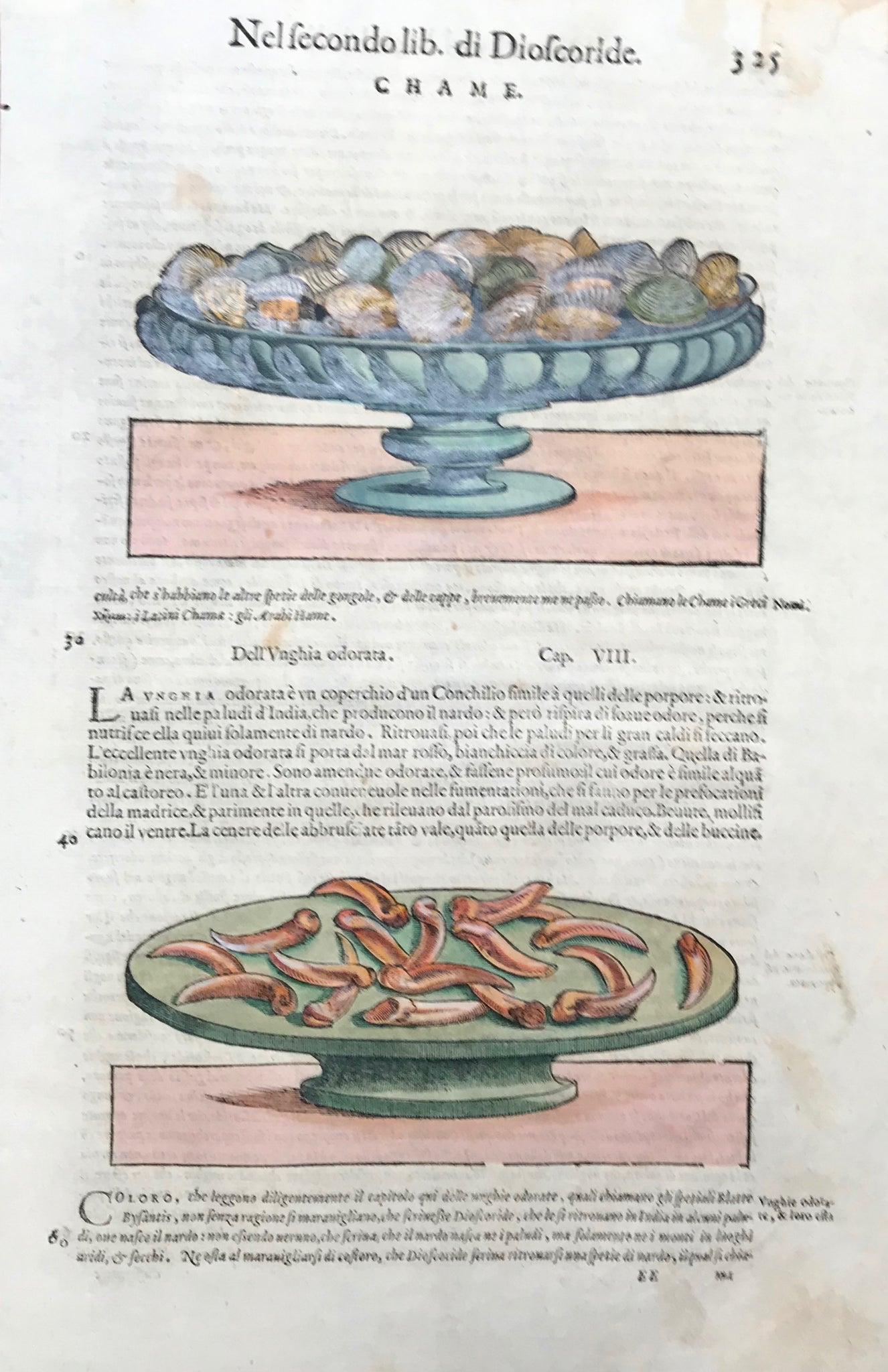 Chame  Woodcut by Pietro Andrea Mattioli (1500-1577). Published 1571. Reverse side is printed with text in Italian. Fine, recent hand coloring. Some light scattered spotting and light age toning. 400 years have left their signs of age!