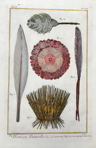 "Histoire Naturelle, Fig. 1. et 2. Oursins. Fig. 3, 4 et 5. Plumes de Mer. (sea urchins, sea pens)  Copper etching published in ""Histoire Naturelle"", 1751 in Paris. Modern hand coloring. Fraying on left margin edge from binding. interior design, wall decoration, ideas, idea, gift ideas, present, vintage, charming, special, decoration, home interior, living room design"