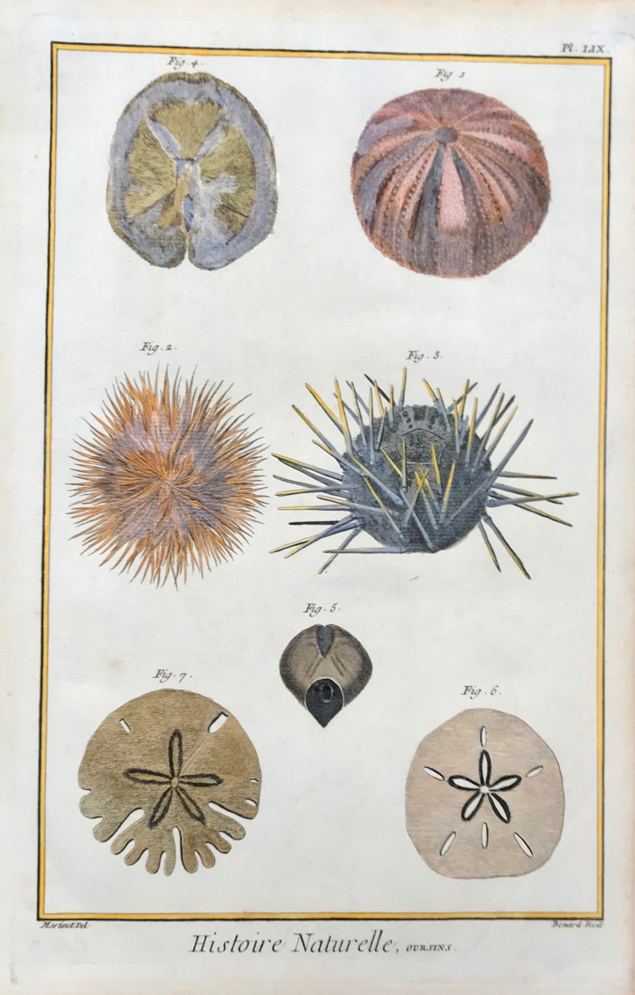 "Histoire Naturelle, Oursins  Sea Urchin  Copper etching by Benard after Martinet for ""Histoire Naturelle"", published 1751 in Paris. interior design, wall decoration, ideas, idea, gift ideas, present, vintage, charming, special, decoration, home interior, living room design"
