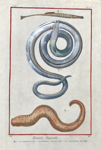 "Fig. 1. La Lmproye. Fig. 2. Le Serpent Marin. Fig 3. La Trompette De Mer  Copper etching by Benard after Martinet for ""Histoire Naturelle"", published 1751 in Paris. Binding marks on left margin edge."