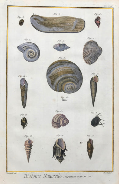 "Histoire Naturelle, Coquilles Fluviatiles  Copper etching by Benard for ""Histoire Naturelle"", published 1751 in Paris. Modern hand coloring. Small, repaired hole in lower part of image. Light browning on right and upper margin edges."