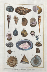 "Histoire Naturelle, Coquilles de Mer  Copper etching by Danioto for ""Histoire Naturelle"", published 1751 in Paris. Recent hand coloring."