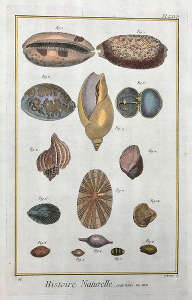 "Histoire Naturelle, Coquilles de Mer  Copper etching by G. Monaco for ""Histoire Naturelle"", published 1751 in Paris. Recent hand coloring."