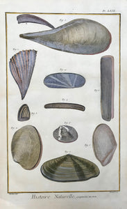 "Histoire Naturelle, Coquilles de Mer  Copper etching by Benard after Martinet for ""Histoire Naturelle"", published 1751 in Paris. Modern hand coloring. Margin edges show light browning."