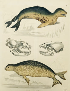 Seals: No title.  Wood engraving published by Schach in Stuttgart. Dated 1845. Pleasant original hand coloring.