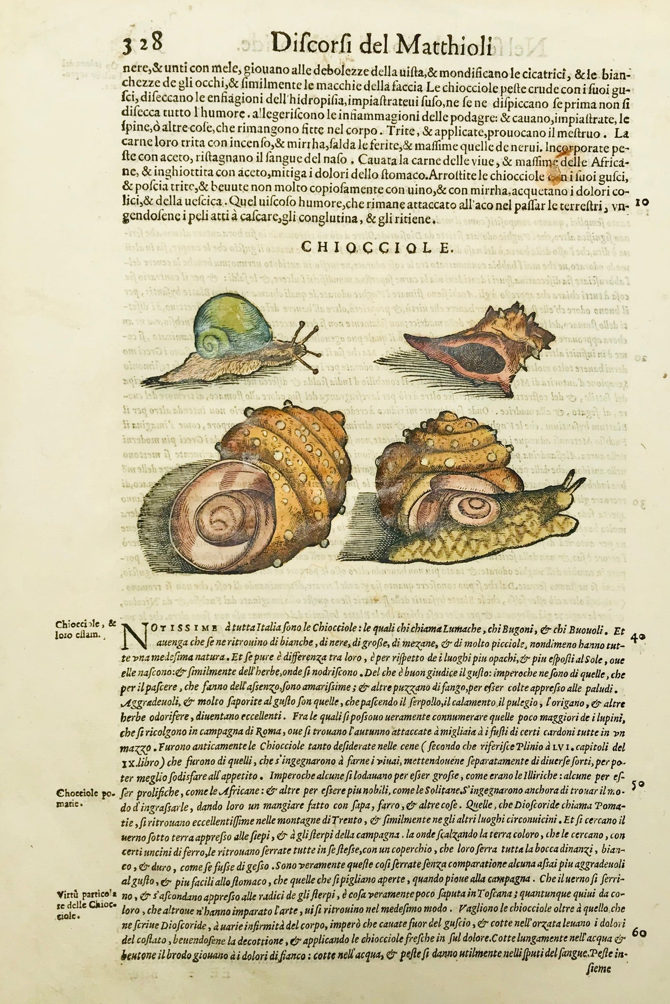 Discorsi del Matthioli  Chiocciole  Woodcut by Pietro Andrea Matthioli in the Italian edition published in 1568.