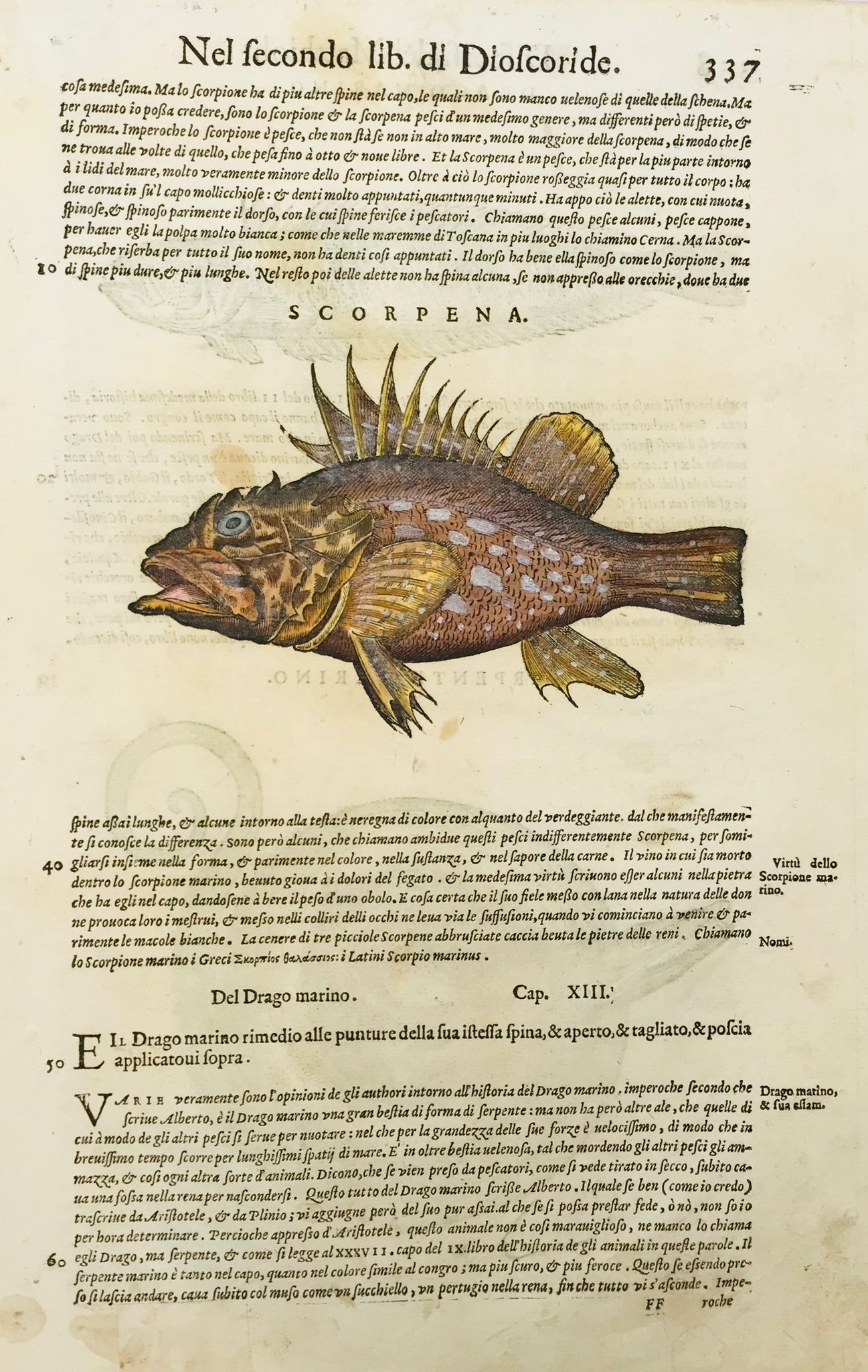 Drago Marino (Stone Fish)  Woodcut by Pietro Andrea Mattioli (1500-1577). Published 1571. Reverse side is printed with another s type of stone fish and a sea snake plus text in Italian. Fine, recent hand coloring. Small repairs on lower margin edge .Some light scattered spotting. 400 years have left their signs of age!