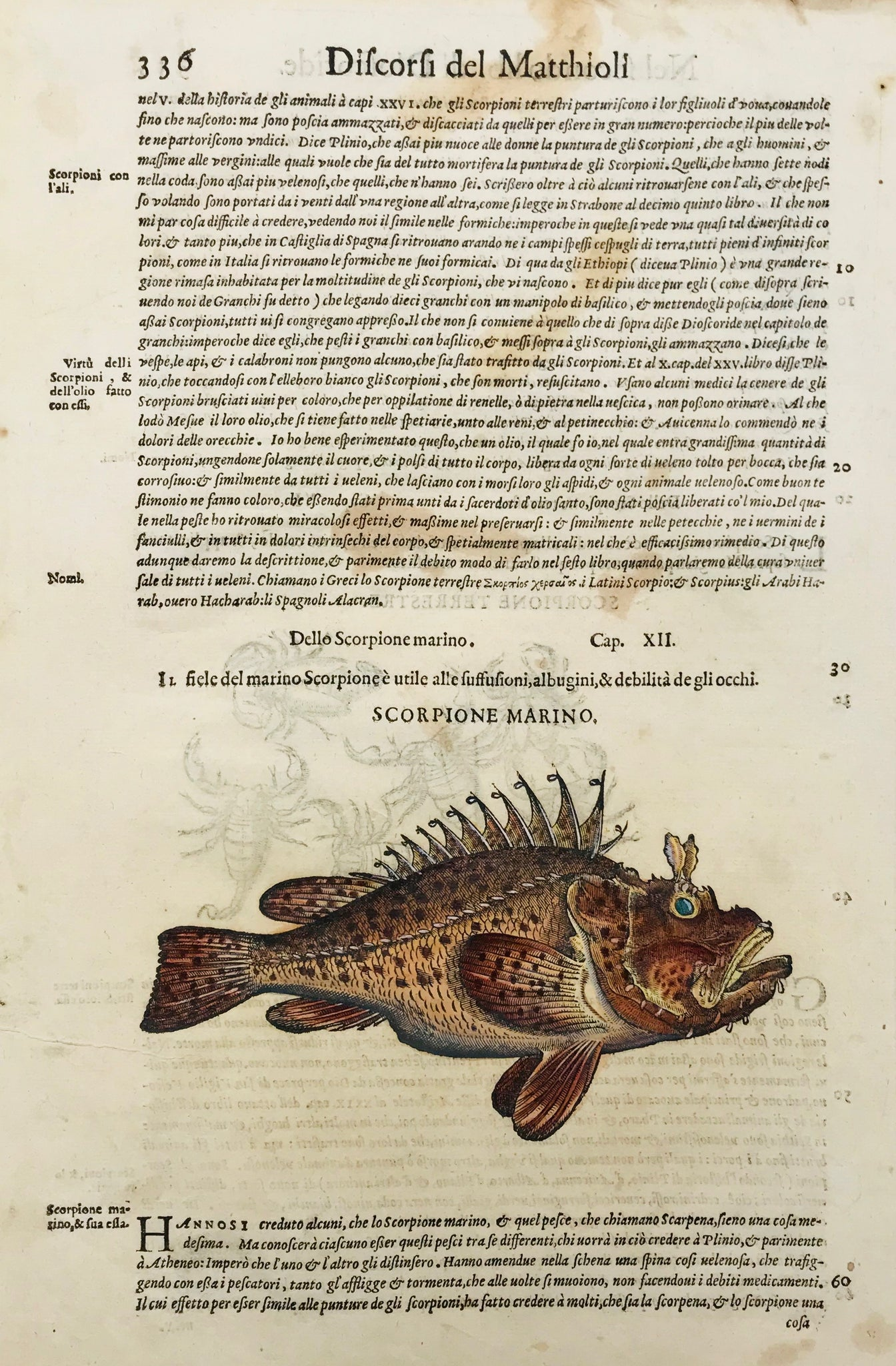 Scorpione Marino (Type of Stone fish)  Drago Marino (Stone Fish)  Woodcut by Pietro Andrea Mattioli (1500-1577). Published 1571. Reverse side is printed with an image of land scorpions plus text in Italian.