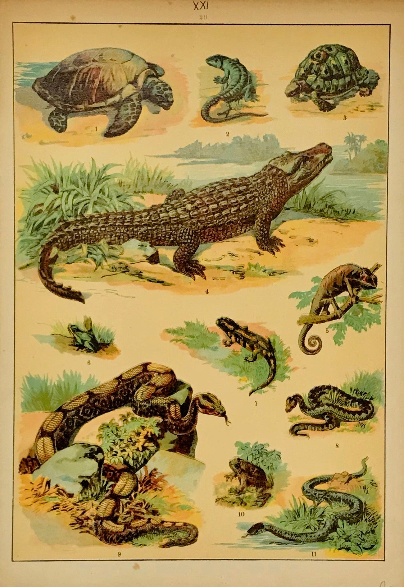 No title  Chromolithograph ca 1900 showing a wide range of reptiles. Light browning on margin edges.