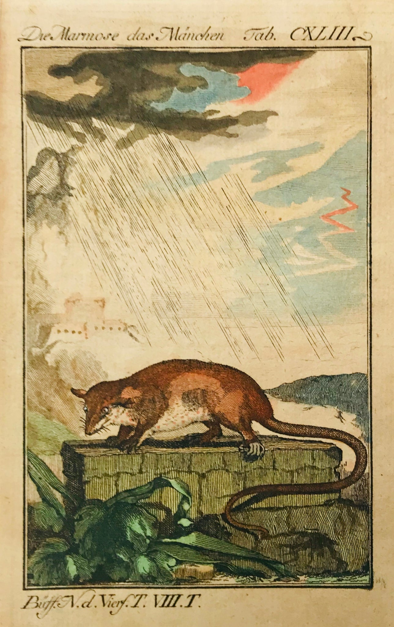 Der Marmose das Maenchen  Notice the dramatic sky showing a lightning and thunderstorm!  Copper engraving ca 1780. Original hand coloring.
