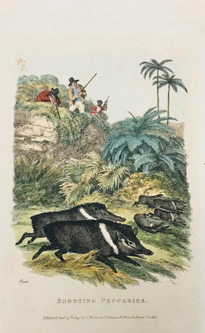 Hunting: Shooting Peccaries  Copper engraving by Howitt dated 1819. Modern hand coloring. Spot in upper left image.